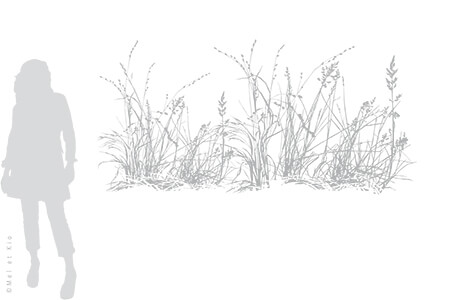 vitrophanie-depoli-vegetal-V10XL-Mel-et-Kio