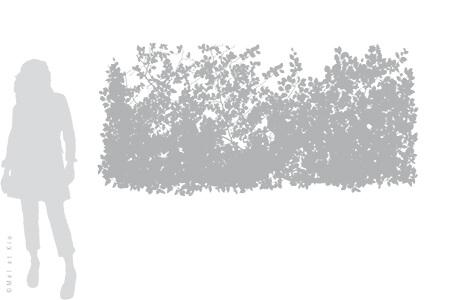 vitrophanie-depoli-vegetal-V8XL-Mel-et-Kio